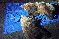 Ochranáři v Tatrách zmasakrovali medvědici s mládětem: Rodinka prý ohrožovala lidi