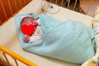 Péťa z babyboxu v Krnově: Čtyřkilový cvalík bude mít už brzy rodinu!