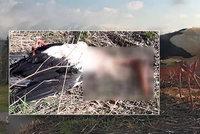 Neznámý pachatel zastřelil hnízdícího čápa: Desetitisícová škoda!