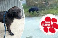 Pes, kterému majitel svázal nohy drátem, se k tyranovi nevrátí: Čeká v útulku na lepší domov