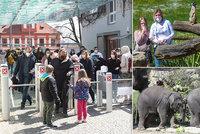 Nával v zoo napříč Českem a dlouhé fronty na lístky. Policie uzavírala dopravu