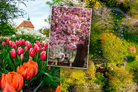 FOTO: Barevná fantazie v botanické zahradě! Prohlédněte si kvetoucí rostliny z ptačí perspektivy