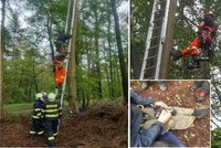 Ornitolog zůstal viset na stromě při kroužkování mláďat datla: Na pomoc mu vyrazili hasiči