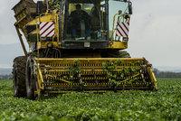 Zemědělec o roku s covidem: Shánění lidí? Šílené. A o balících přes plot a dotacích