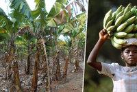Miliony dětí ještě stále pracují na plantážích. Češi stím bojují i nákupy v supermarketech