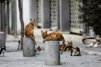 Městečko vyhlásilo lockdown pro kočky. Kdo mazlíčka pustí ven, hrozí mu pokuta