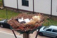 Sloup v Žamberku spadl i s čápaty: Nové hnízdo jim vytvořilo město
