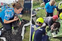 Lezl, kam neměl: Pražští hasiči zachránili ze sutin domu psa. Zasypaly ho trosky po tornádu