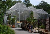 Kus Argentiny v Zoo Ostrava: Mají tu největší voliéru, žijí v ní kondoři i morčata