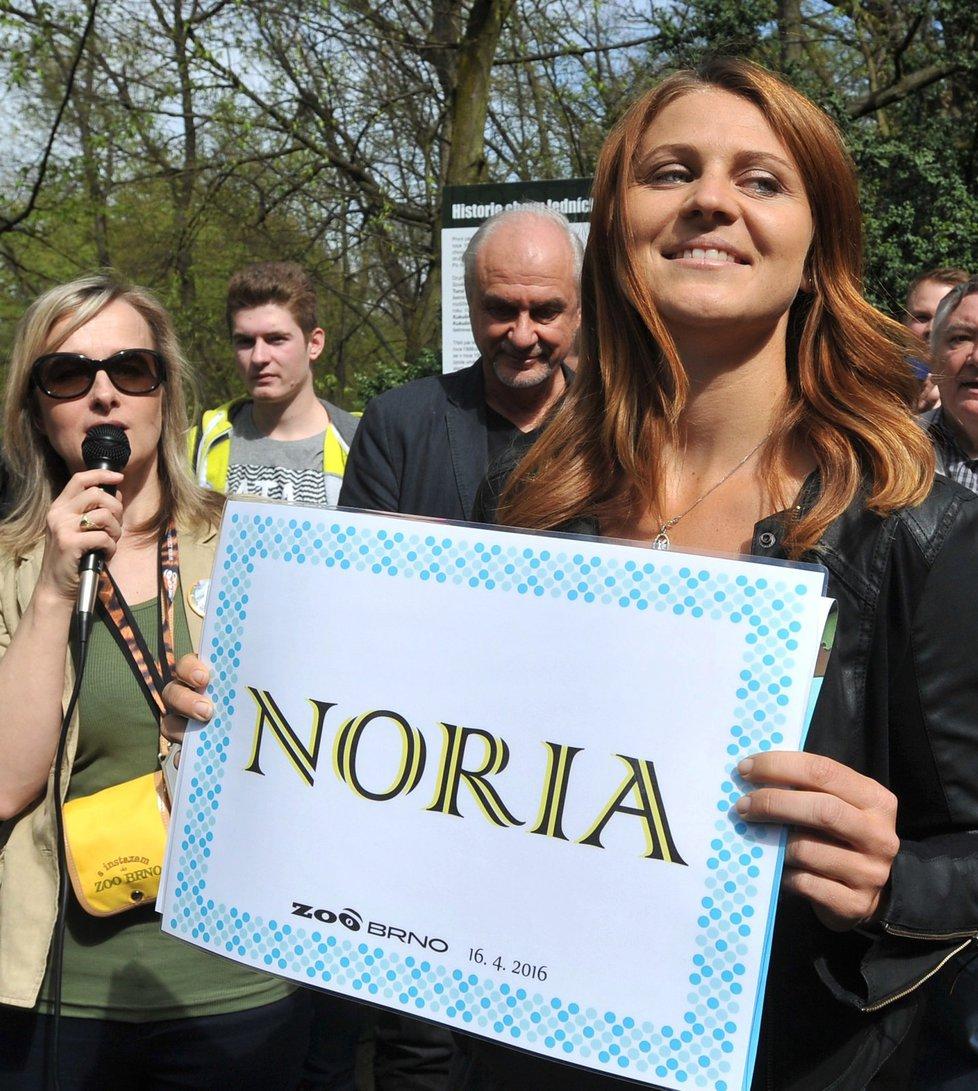 Lední medvídě v brněnské zoo dostalo od tenistky Lucie Šafářové jméno Noria