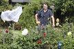 Na zahradě je králem v případě, že seká trávu. Jinak je to pýcha maminky.