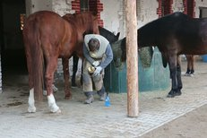 Vydra a koně