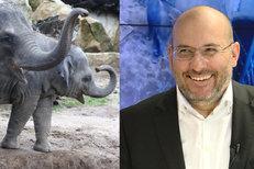 Ze sloního trusu bude ZOO vyrábět papír! Jak na to?