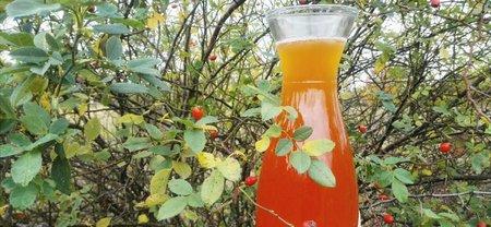 Šípkový sirup se například skvěle hodí na ochucení čaje!