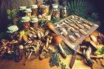 Jak správně sušit a uchovat houby? Zkuste nit, síto nebo pečicí papír