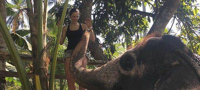 Vlhová krmila na ovolené i slona