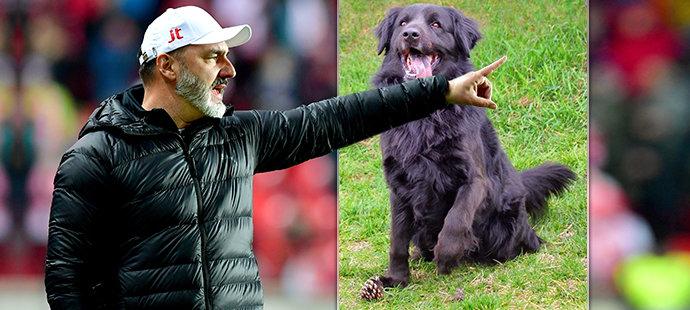 Trenér fotbalové Slavie Jindřich Trpišovský ukázal dobré srdce. Útulku v Kralupech nad Vltavou poslal čtvrt milionu!