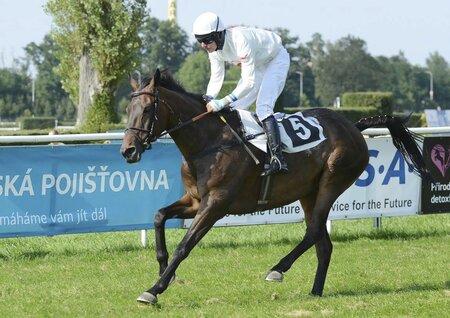 Orphee des Blins vyhrála Velko v letech 2012 až 2014
