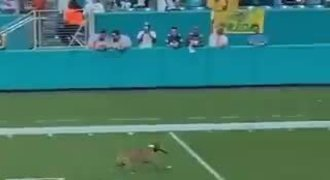 Pes chytil frisbee letící 80 metrů. Podepište s ním smlouvu! Video koluje sítěmi