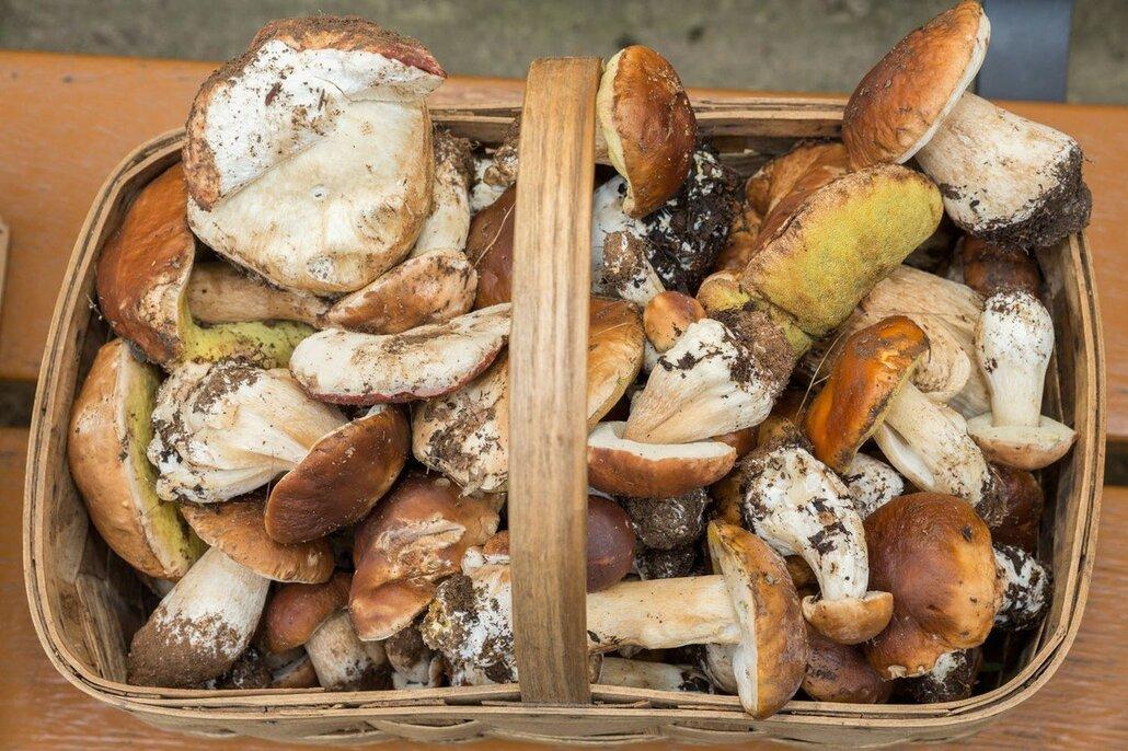 Máme mnohem více způsobů, jak houby usušit – v sušičce, v troubě nebo na radiátoru