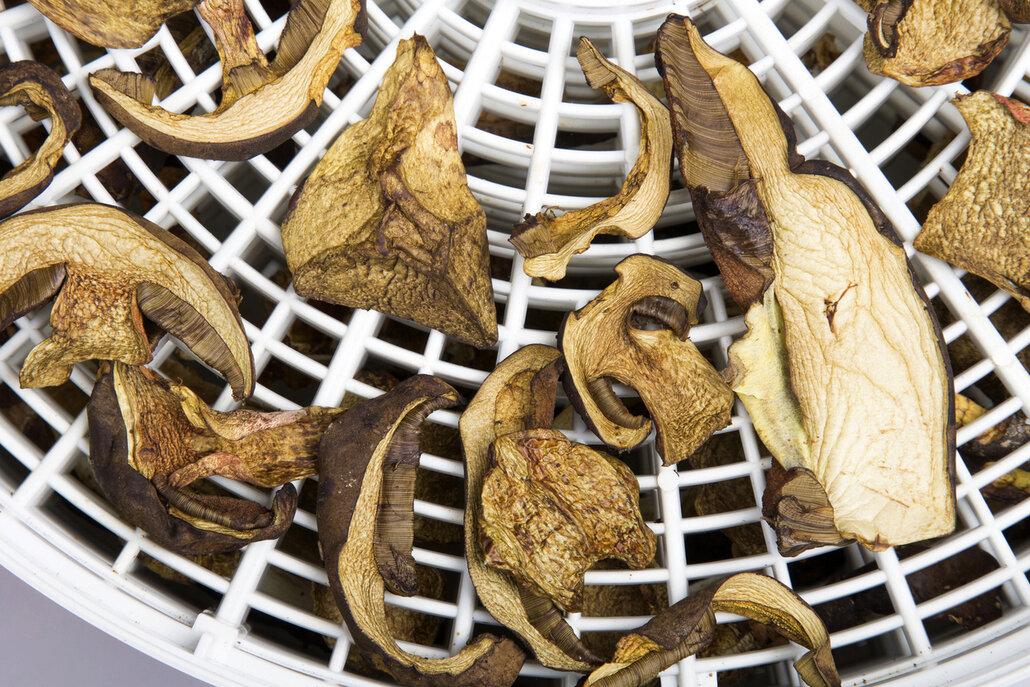 Sušení hub v sušičce je nejjednodušší