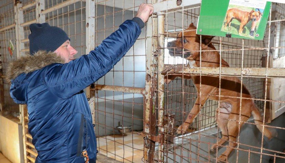 Plné misky a útulné pelíšky: Redakce CZECH NEWS CENTER dovezla nadílku do Jimlína