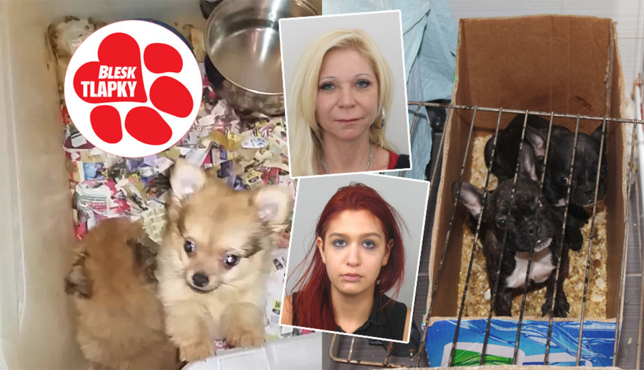Překupnice s na smrt nemocnými zvířaty spojuje jeden muž. Se psy nekšeftovaly samy. Podvedených už je stovka.