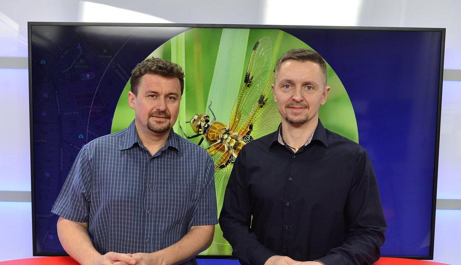 Entomolog: Hmyz opravdu vymírá. Z Česka zmizela za 80 let třetina motýlů