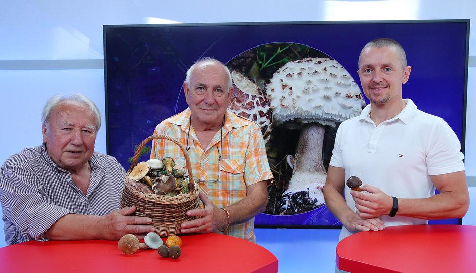 Mykologové: Sbírejte jen ty houby, které znáte a které jsou zdravé