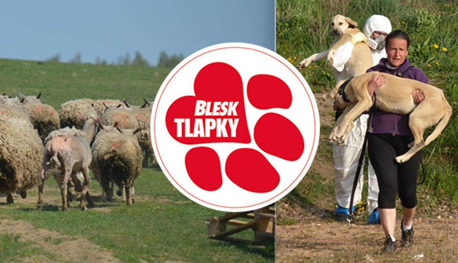 Majitel statku hrůzy zemřel. Potrestán za týrání zvířat bude zřejmě jen turecký vlastník psů