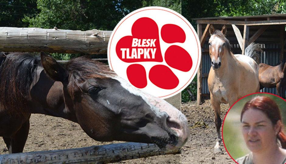 Chovatelka podezřelá z týrání má další problém. Koně strčila do dřevníku, ohrady a přístřešky pro ně postavila načerno