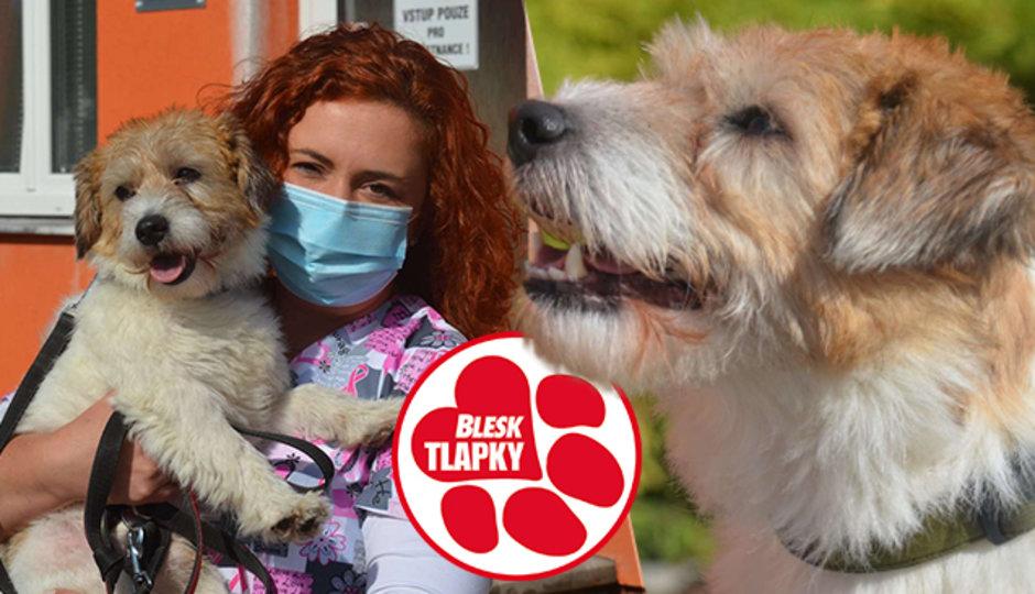 Z týraného Artuše je krásný pes. Veterinářka se bojí, že se vrátí majiteli, který na něm dělal pokusy