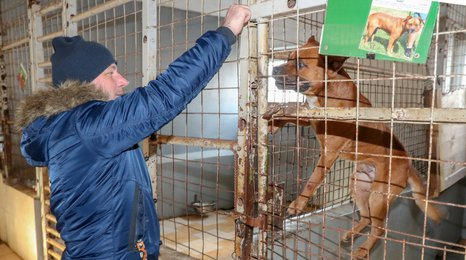 Plné misky a útulné pelíšky: Redakce CZECH NEWS CENTER dovezli nadílku do Jimlína
