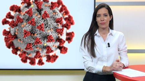Karanténa kvůli koronaviru: Přijdu o peníze? Co se psem? Odpovědi, které byste měli znát