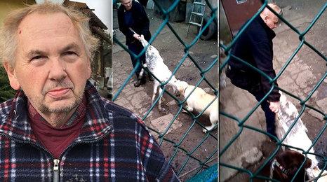 Šokující podívaná: Muž se přetahuje o kozu se svými psy. Byla to nehoda nebo zvrácená zábava?