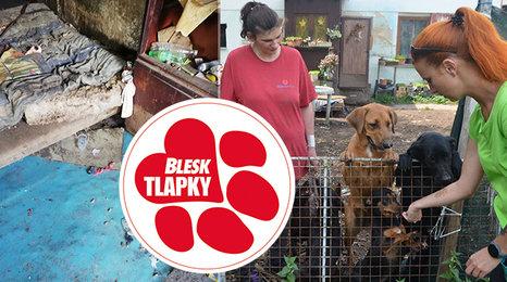Svérázná množitelka má další psy. Část jich úřady odeberou, o štěňata se postarají v útulcích