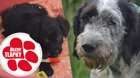 Množitelka přišla o dvě desítky psů, všichni propadli státu. V útulku čekají na nové domovy