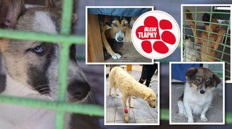 Většina zvířat zadržených na dálnici odjela do Německa. Bulhaři za ně útulku zaplatili