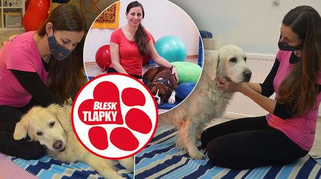 Fyzioterapie uleví psím seniorům a nakopne aktivní sportovce. Vyhrabaná jáma na zahradě je odměnou