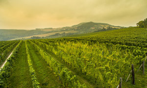 Pálava z výšky: Užijte si famózní pohled na moravské vinice
