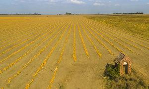 I tohle je Morava: Místo vinic oranžové lány dýní. Super záběry z dronu