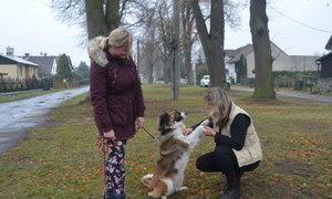 Útulek Dogsy: Adoptujte si veselou fenku, kozu nebo berana