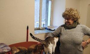 Jiřina (70) dala domov desítkám koček. A poníkovi, kozlům nebo srnci!