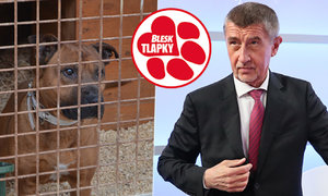 Babiš o tyranech zvířat i eutanazii: Zvířata má rád, o životu a smrti rozhodovat nechce