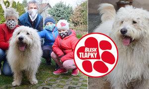 Maskot Blesk tlapek Argo, nyní Arnošt slaví rok v nové rodině. Je z něj krásný šťastný pes