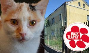 Teplické kočky potřebují půl miliónu na nový domov, jinak skončí v srpnu na ulici