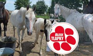 """Týrala koně, těsně před odběrem je ale """"uklidila"""". Jdou po ní veterináři i policie"""