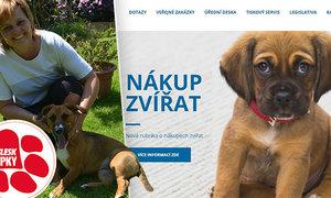 Jak správně koupit psa? Do boje s nevědomostí se pustili i veterináři. Na svém webu radí, jak nenaletět množitelům