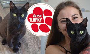 Třínohá kočička Bety se zotavuje vútulku. Odchovala koťata, teď hledá nový domov