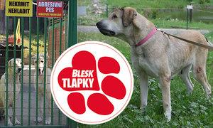 Týraní psi se vrátí majiteli. Případ skončil, zapomeňte.